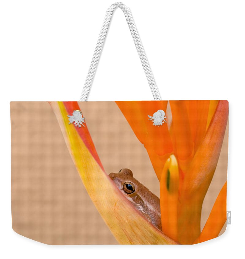 Frog Weekender Tote Bag featuring the photograph Heliconia And Frog by Steven Sparks