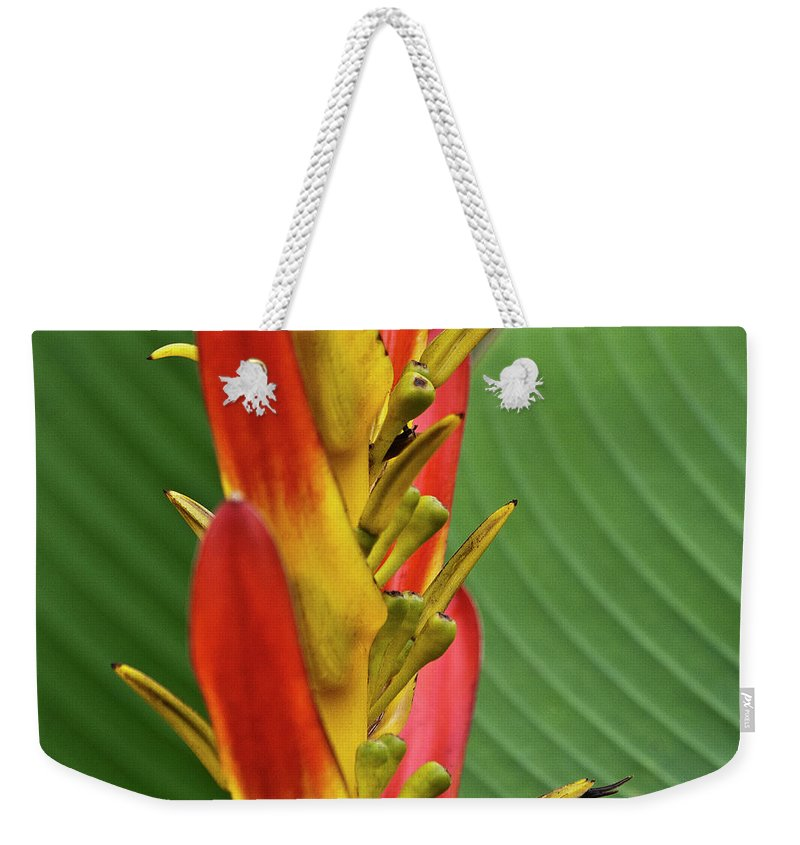 Heliconia Weekender Tote Bag featuring the photograph Heliconia by Heiko Koehrer-Wagner