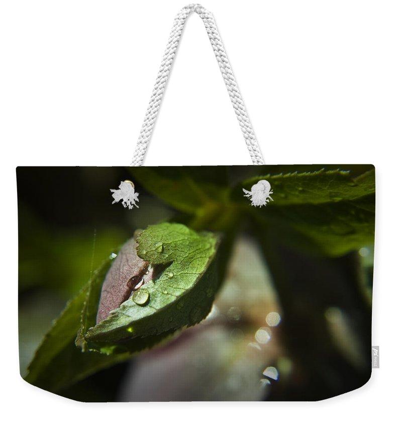 Helleborus Weekender Tote Bag featuring the photograph Helleborus Bud by Teresa Mucha