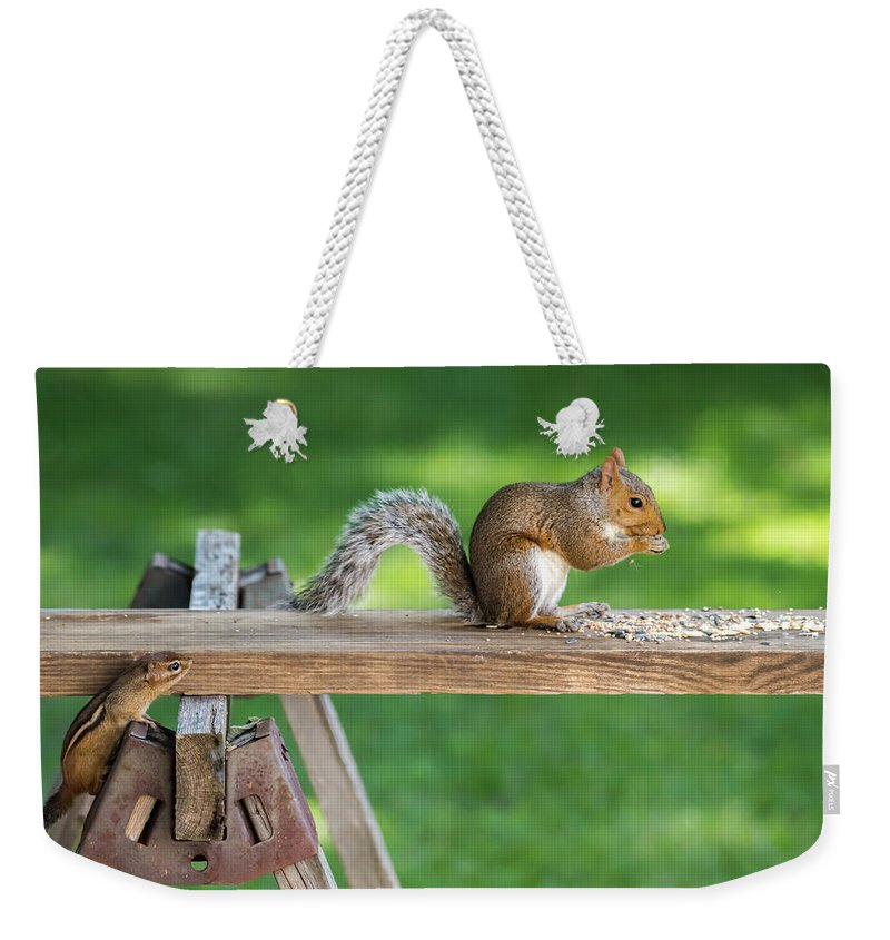 Terry D Photography Weekender Tote Bag featuring the photograph Hello Are You Gonna Eat All That? Chipmunk And Squirrel by Terry DeLuco