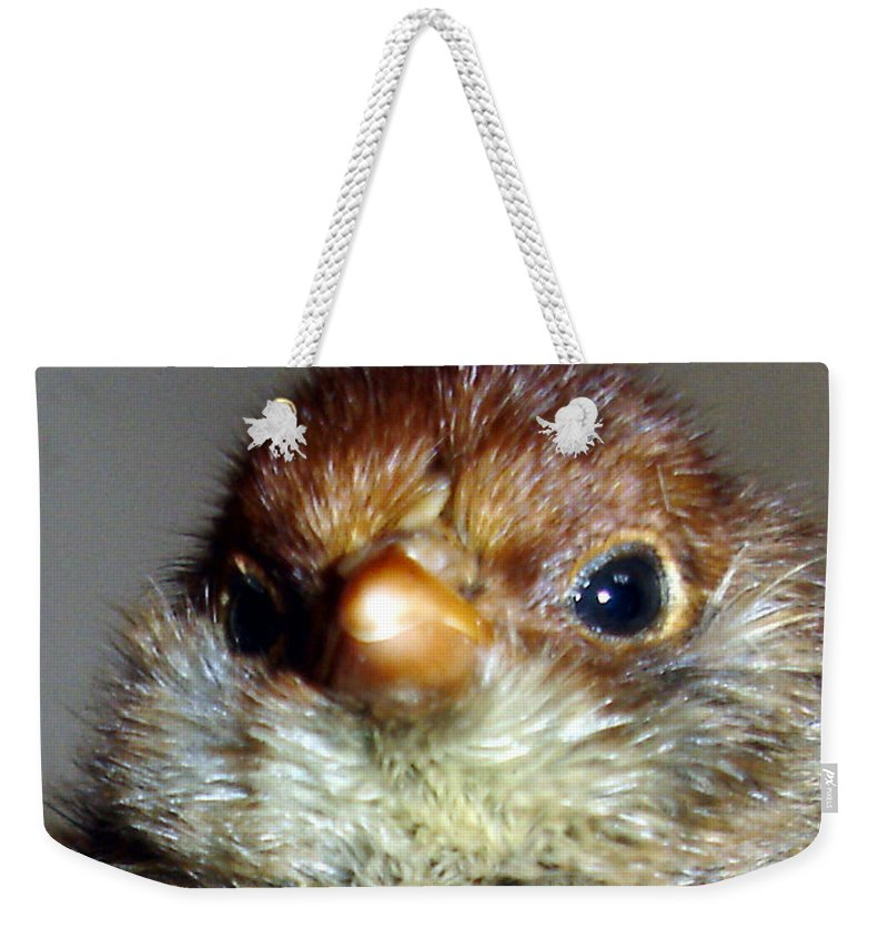 Chick Weekender Tote Bag featuring the photograph Hello Chick by Susan Baker
