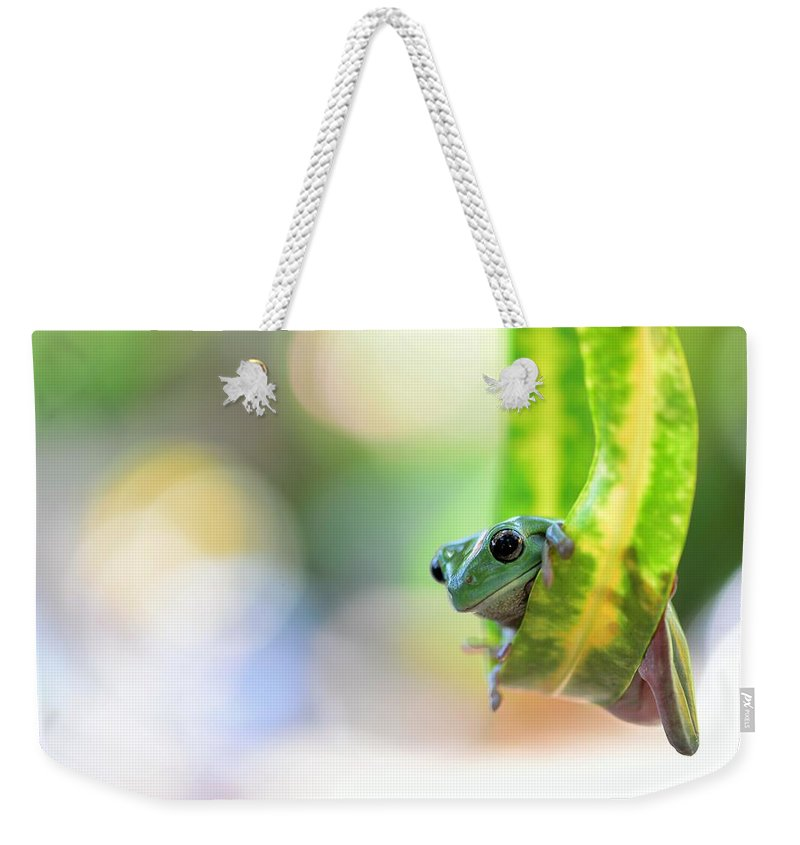 Animal Weekender Tote Bag featuring the photograph Hello by Jufri Mustafa