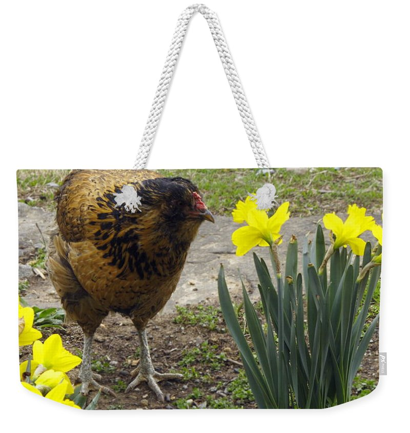 Brown And Tan Hen Walking Weekender Tote Bag featuring the photograph Hen And Daffodils by Sally Weigand