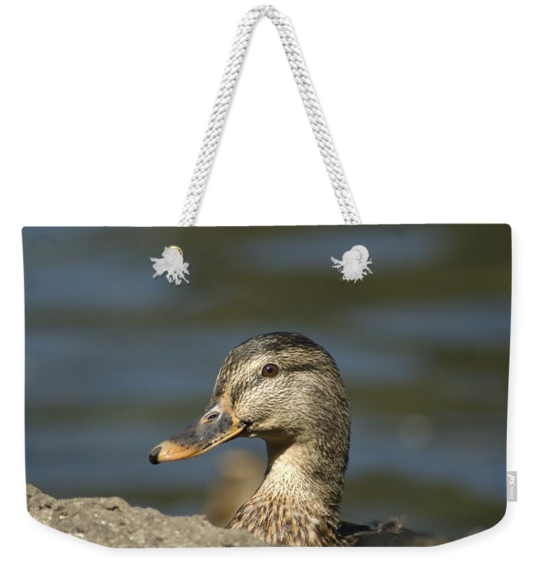 Mallard Weekender Tote Bag featuring the photograph Hen Mallard by Sara Stevenson