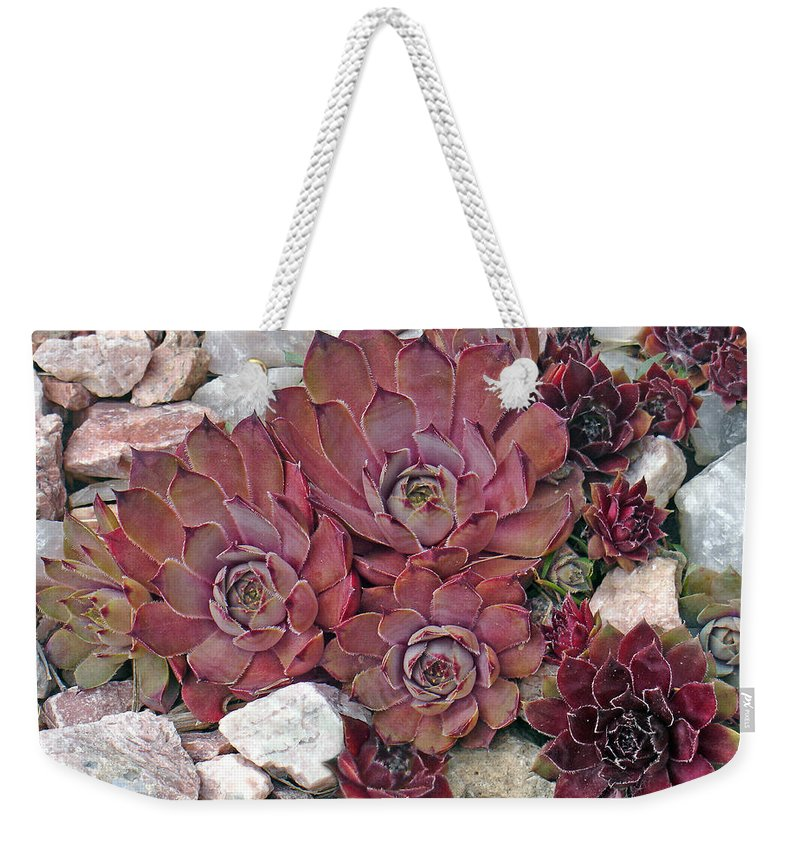 Landscape Weekender Tote Bag featuring the photograph Hens and Chickens by Steve Karol