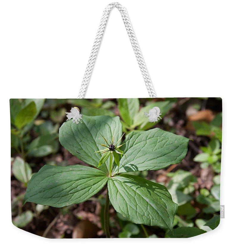 Herb Paris.flower.plant Weekender Tote Bag featuring the photograph Herb Paris by Bob Kemp