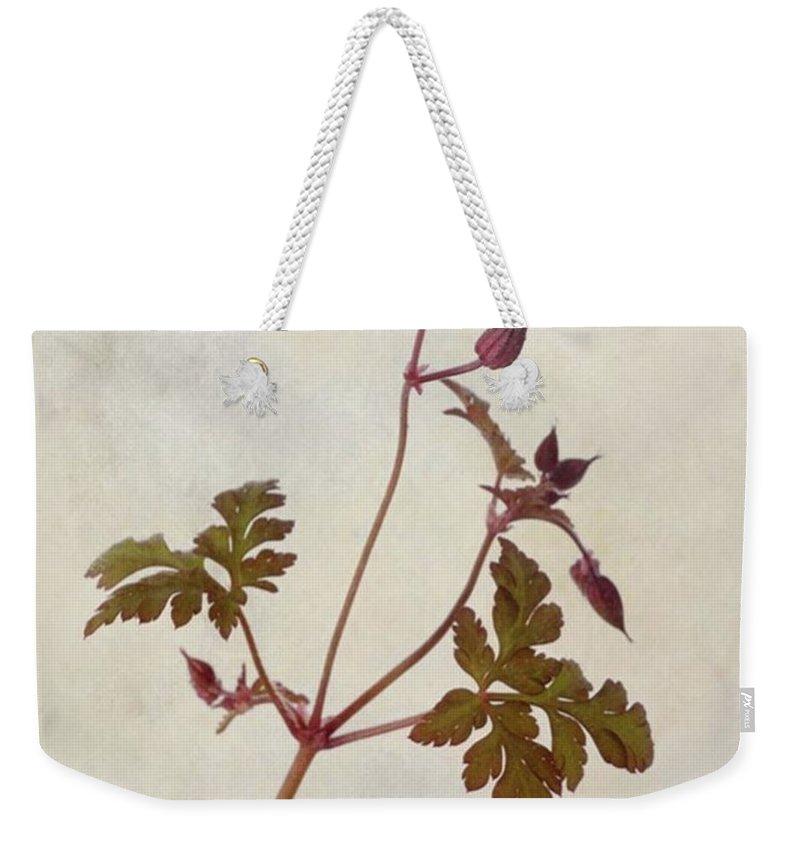 Beautiful Weekender Tote Bag featuring the photograph Herb Robert - Wild Geranium  #flower by John Edwards
