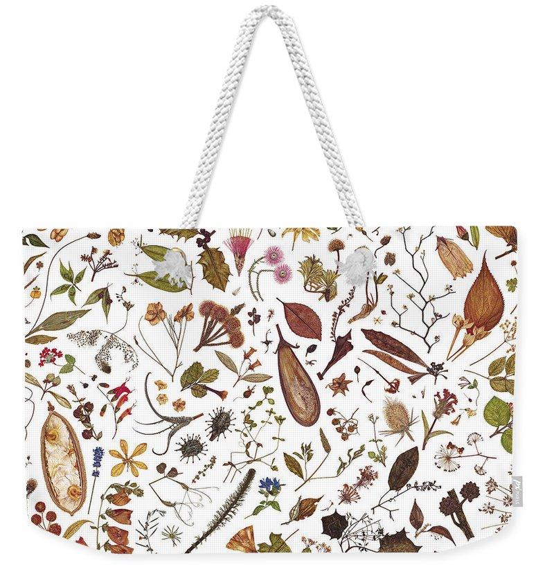 Flowers Weekender Tote Bag featuring the painting Herbarium Specimen by Rachel Pedder-Smith