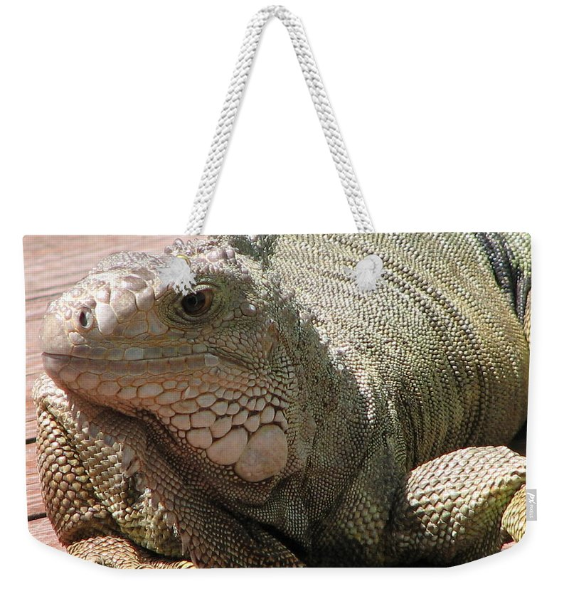 Iguana Weekender Tote Bag featuring the photograph Here Leezard Leezard by Stacey May