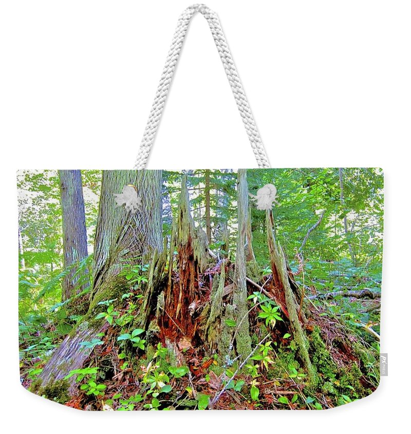 Fairies Weekender Tote Bag featuring the photograph Here There Be Fairies by Mario MJ Perron