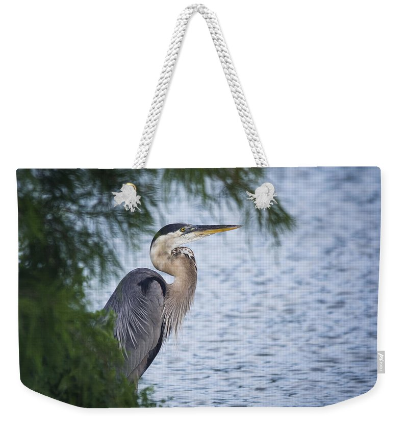 Great Blue Heron Weekender Tote Bag featuring the photograph Heron Hide And Seek by Saija Lehtonen