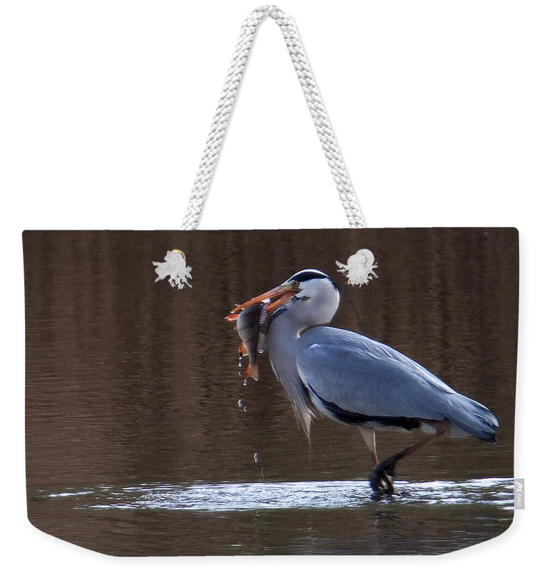 Heron Weekender Tote Bag featuring the photograph Heron With Perch by Bob Kemp