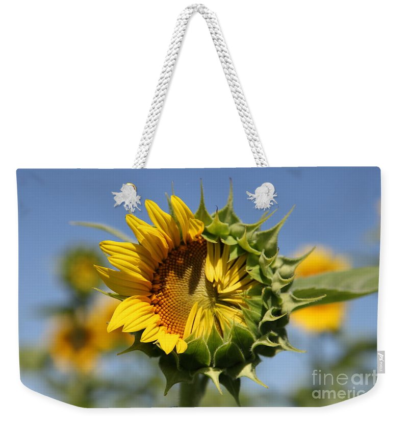 Sunflowers Weekender Tote Bag featuring the photograph Hesitant by Amanda Barcon