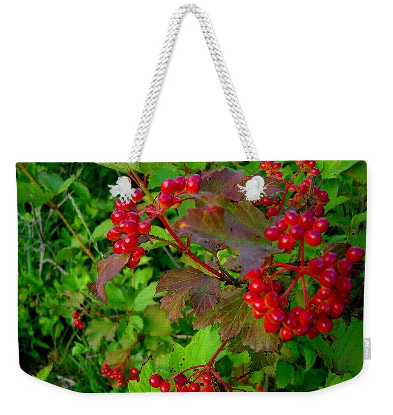 Hi Bush Cranberries Berries Weekender Tote Bag featuring the photograph Hi Bush Cranberry Close Up by Joanne Smoley