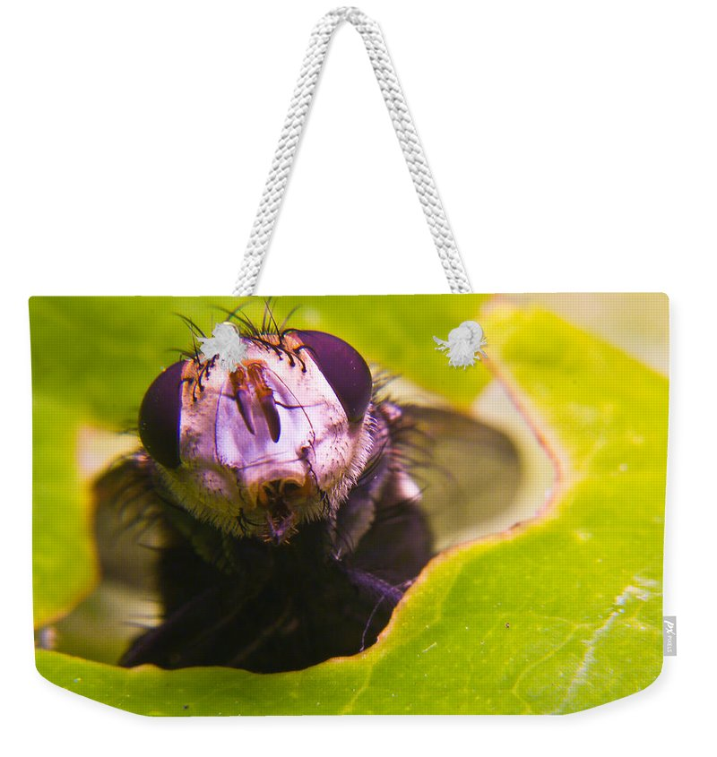 Fly Weekender Tote Bag featuring the photograph Hi There by Douglas Barnett
