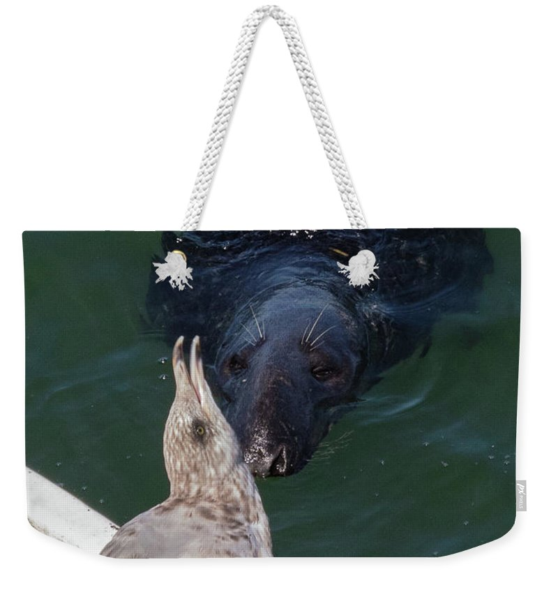 Hi There Weekender Tote Bag featuring the photograph Hi There by Michelle Constantine