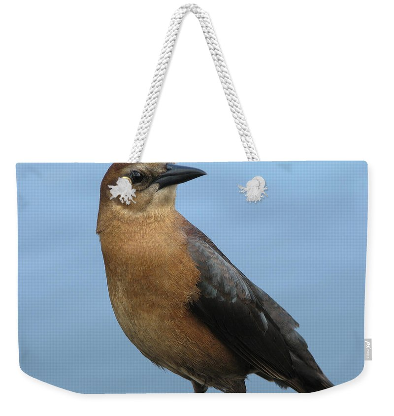 Bird Weekender Tote Bag featuring the photograph Hi There by Stacey May