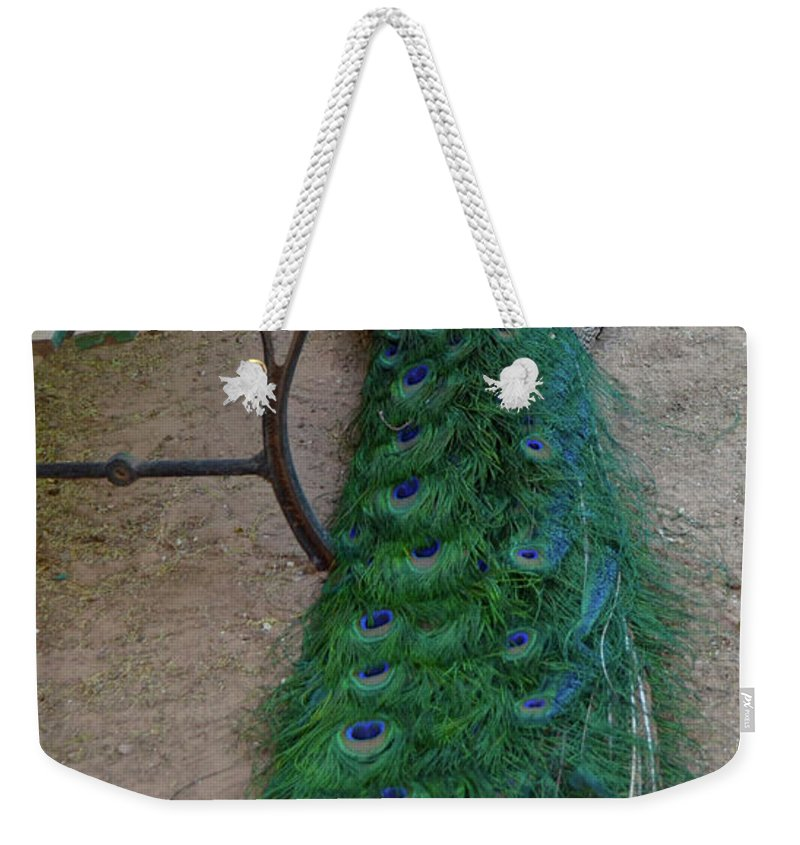 Peacock Weekender Tote Bag featuring the photograph Hidden Plumes by Shauna Millar
