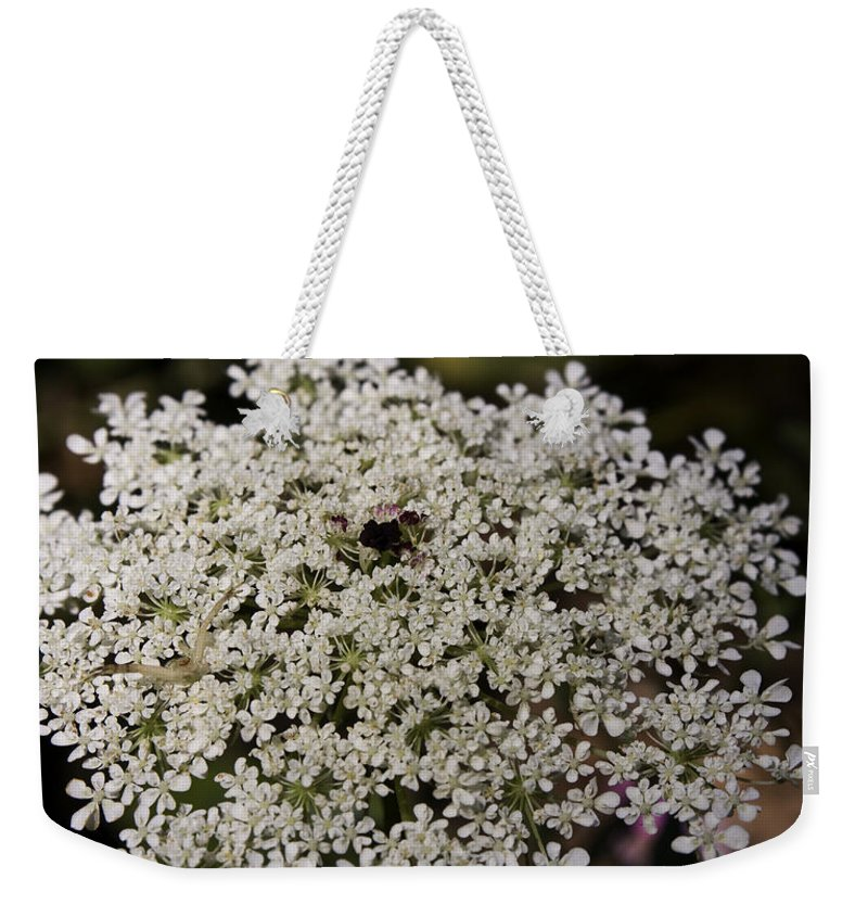 Queen Weekender Tote Bag featuring the photograph Hiding In The Lace by Teresa Mucha