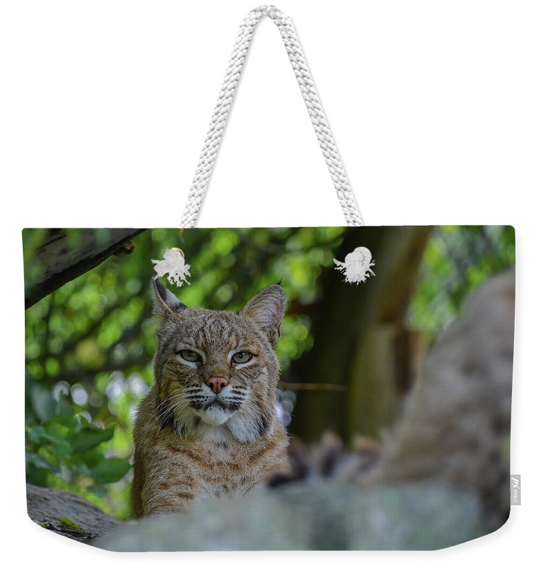Wildlife Weekender Tote Bag featuring the photograph Hiding In The Rocks by Jesse MacDonald