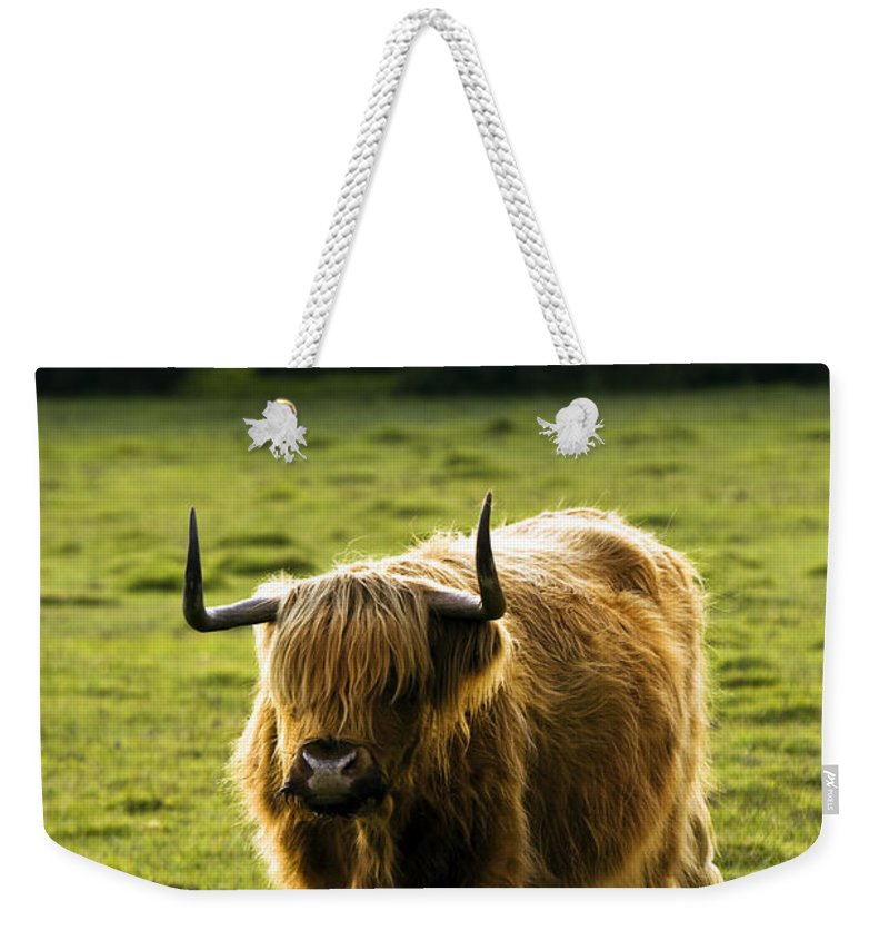 Heilan Coo Weekender Tote Bag featuring the photograph Highland Cattle by Angel Tarantella