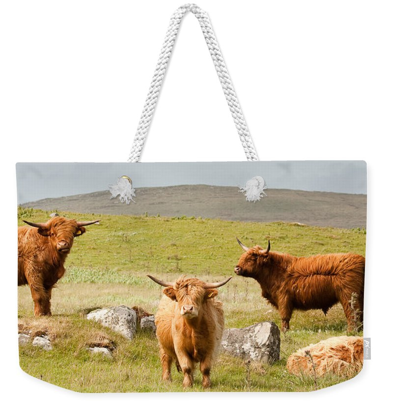 Scotland Weekender Tote Bag featuring the photograph Highland Cattle by Colette Panaioti