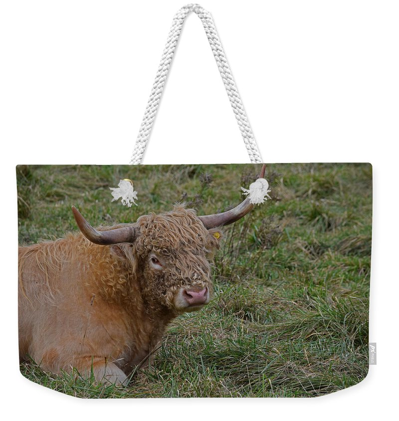 Highland Cattle Weekender Tote Bag featuring the photograph Highland Cattle by Maria Keady