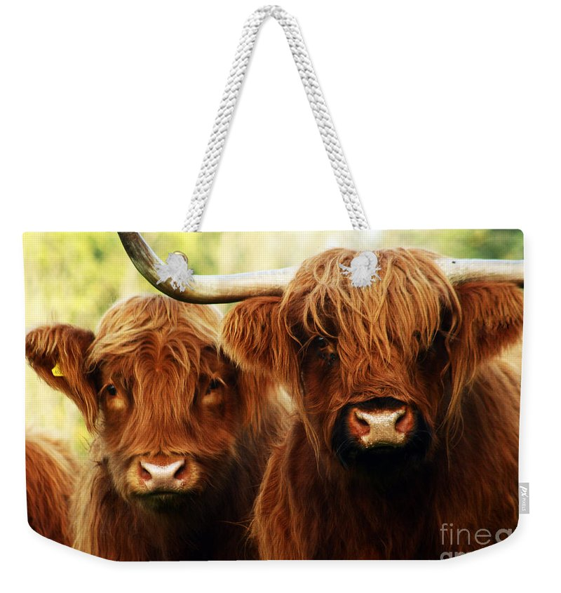 Cow Weekender Tote Bag featuring the photograph Highland Cows by Angel Ciesniarska