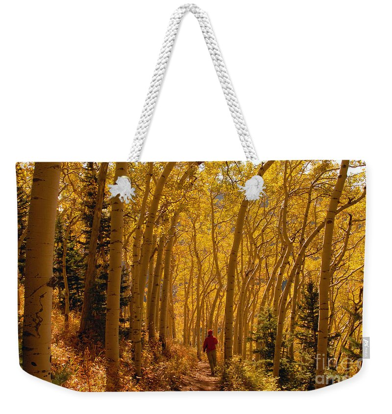 Fall Weekender Tote Bag featuring the photograph Hiking In Fall Aspens by David Lee Thompson