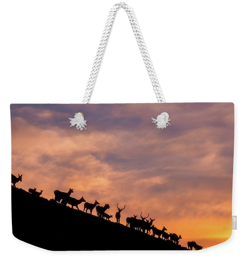 Elk Weekender Tote Bag featuring the photograph Hillside Elk by Darren White