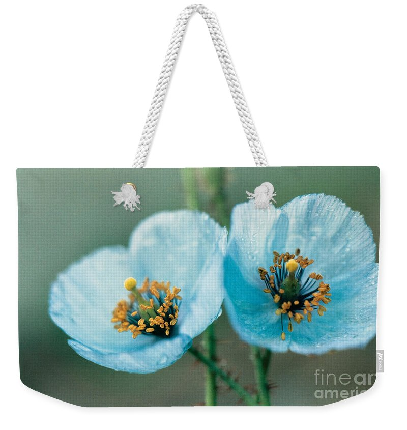 Flower Weekender Tote Bag featuring the photograph Himalayan Blue Poppy by American School