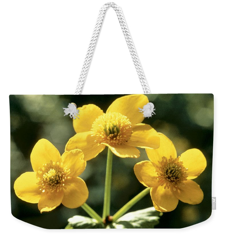 Flower Weekender Tote Bag featuring the photograph Himalayan Marsh Marigold by American School