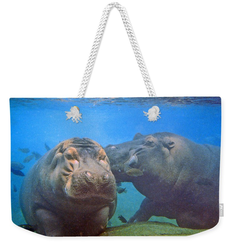 Animals Weekender Tote Bag featuring the photograph Hippos In Love by Steve Karol