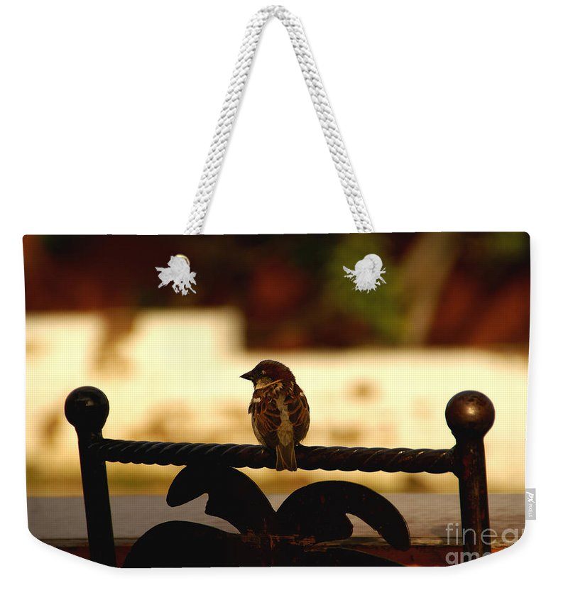 Bird Weekender Tote Bag featuring the photograph His Eye Is On The Sparrow by Linda Shafer