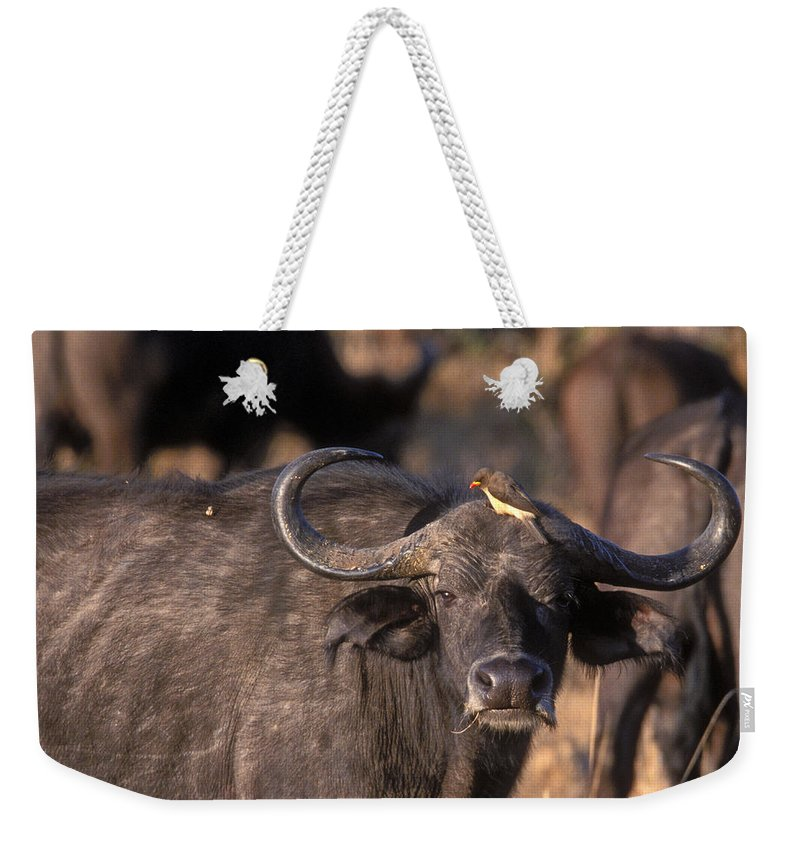 Cape Buffalo Weekender Tote Bag featuring the photograph Hitching A Ride 1 by Sandra Bronstein