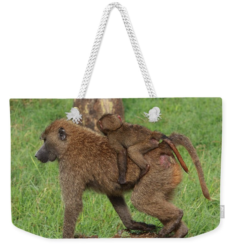 Baboon Weekender Tote Bag featuring the photograph Hitching A Ride by Aidan Moran