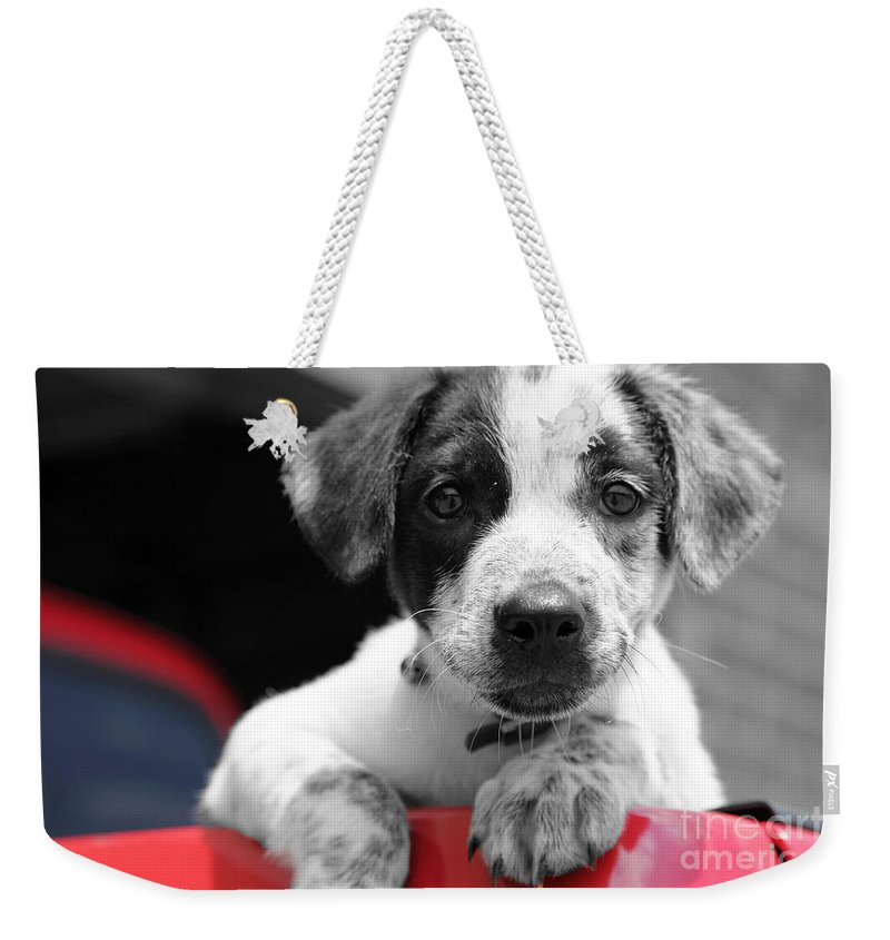 Dogs Weekender Tote Bag featuring the photograph Hmmm by Amanda Barcon