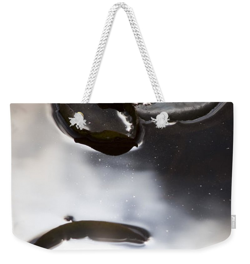 Water Pond Lake Leaf Leaves Reflection Nature Outdoors Drop Bright Cloud Weekender Tote Bag featuring the photograph Holding The Sun by Andrei Shliakhau