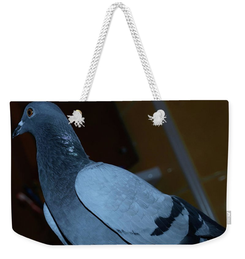 Portrait Weekender Tote Bag featuring the photograph Homing Pigeon by Crina Iancau