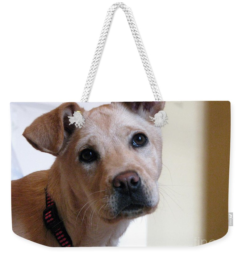 Dog Weekender Tote Bag featuring the photograph Honey by Amanda Barcon