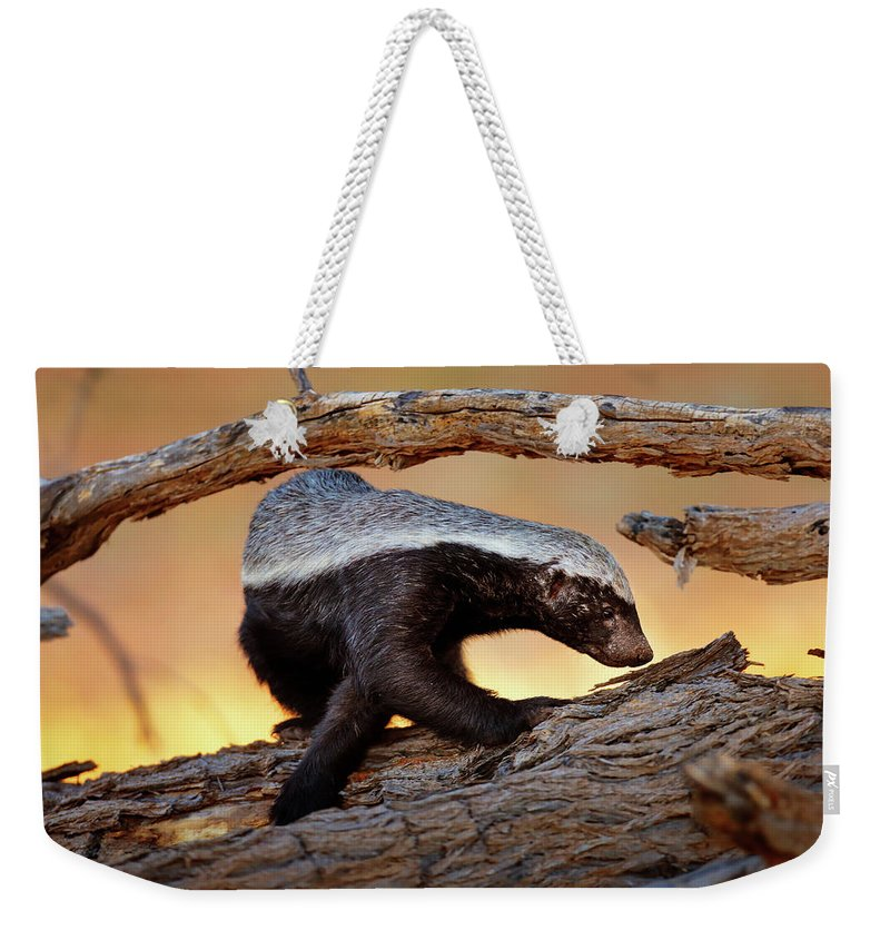 Honey Badger Weekender Tote Bag featuring the photograph Honey Badger by Johan Swanepoel