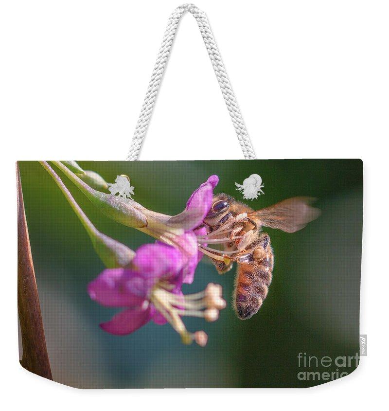 Animal Weekender Tote Bag featuring the photograph Honey Bee On Goji Berry Flower by Jivko Nakev