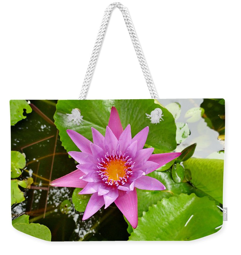 Water Lily Weekender Tote Bag featuring the photograph Honolulu Water Lily by Robert Meyers-Lussier