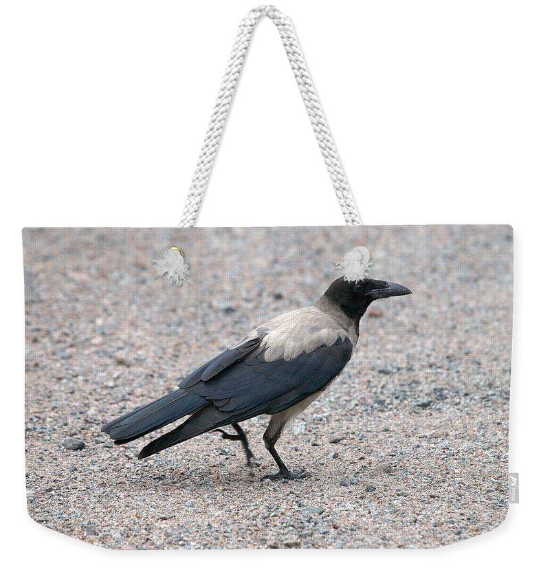 Lehtokukka Weekender Tote Bag featuring the photograph Hooded Crow by Jouko Lehto