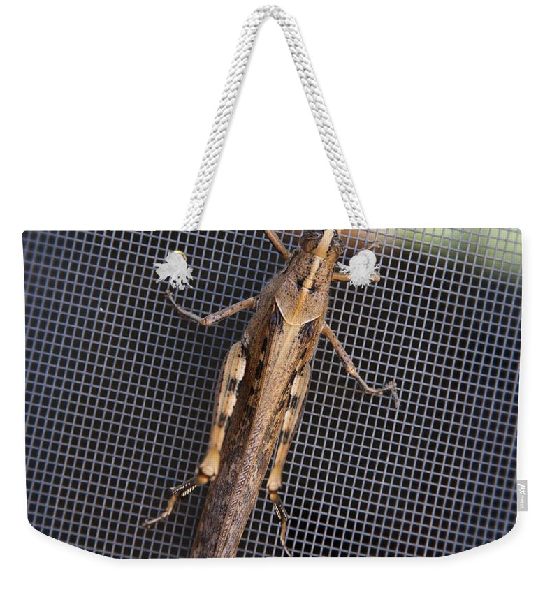 Grasshopper Weekender Tote Bag featuring the photograph Hopper by Kelley King