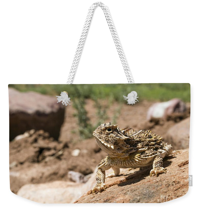 Cutts Nature Photography Weekender Tote Bag featuring the photograph Horned Lizard by David Cutts