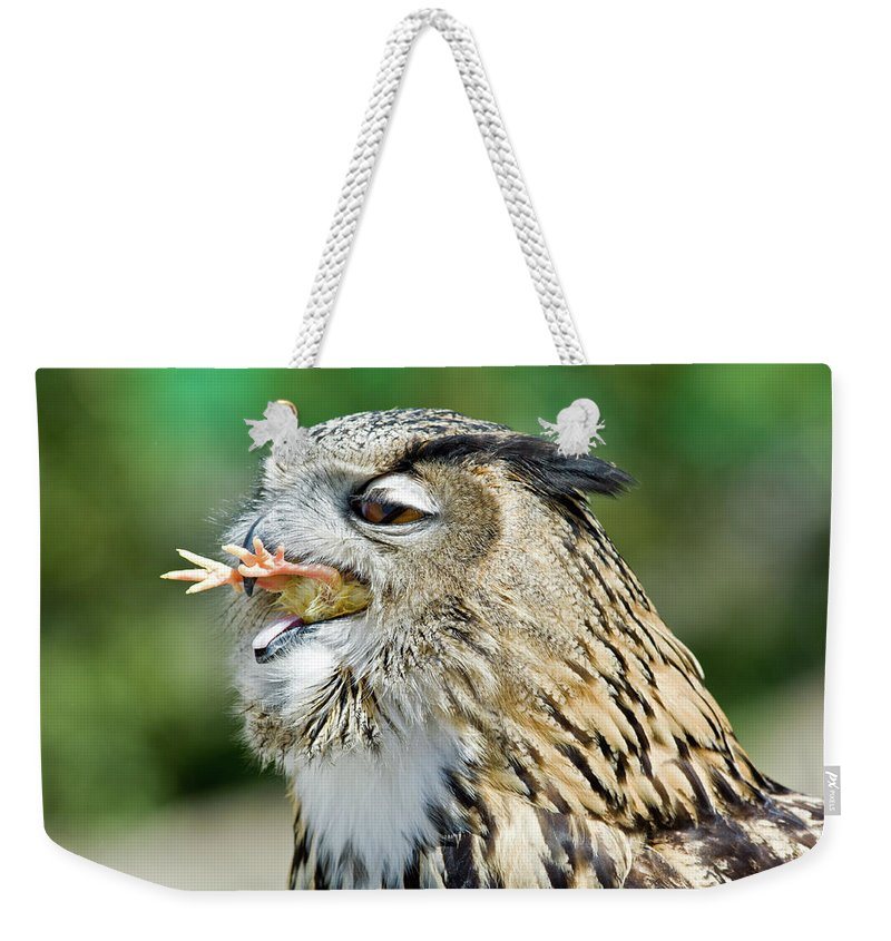 Horned Owl Eating Chicken Weekender Tote Bag For Sale By Aivar Mikko