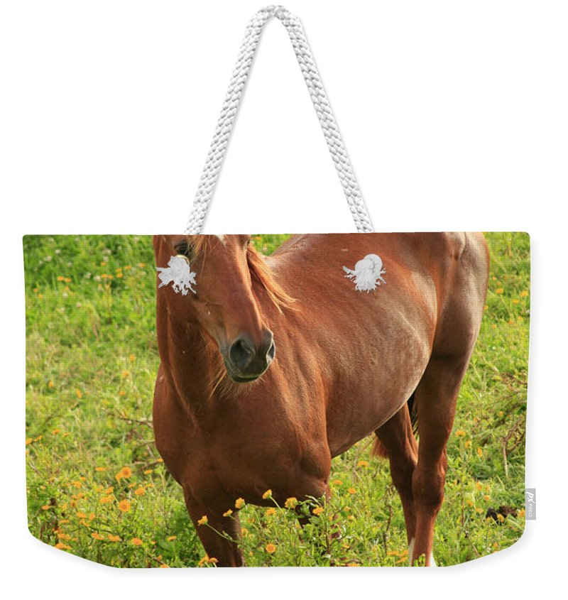Animals Weekender Tote Bag featuring the photograph Horse In A Field With Flowers by Gaspar Avila