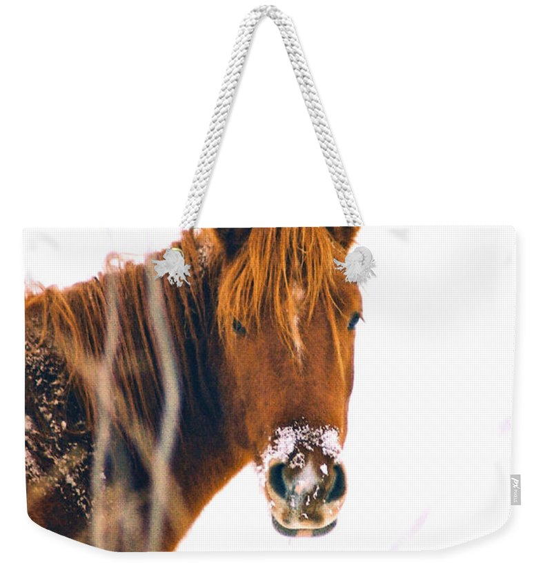 Horse Weekender Tote Bag featuring the photograph Horse In Winter by Steve Karol