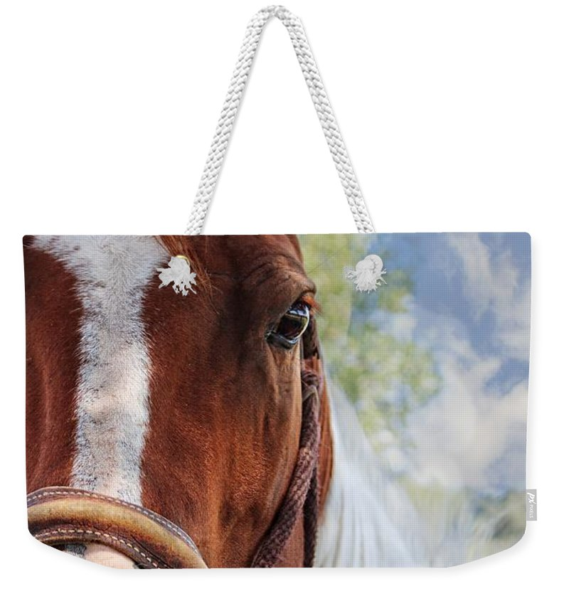 Horse Weekender Tote Bag featuring the photograph Horse Portrait Closeup by Ella Kaye Dickey